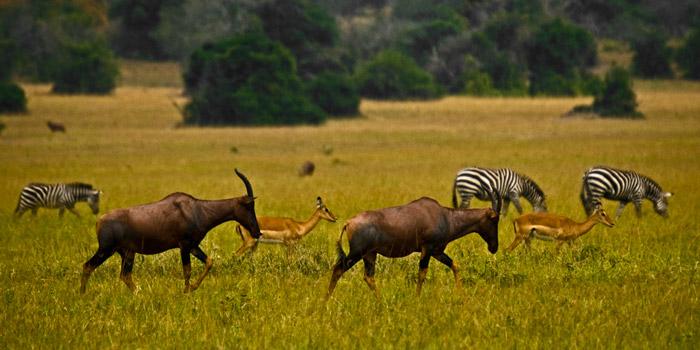 3 Days Rwanda Wildlife Safari